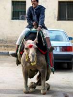 dvi transporto priemones
